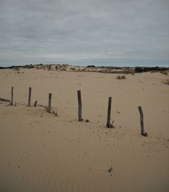 Captura10doñana