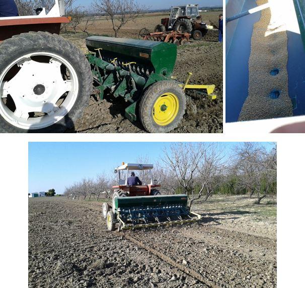 Depósito para la semilla de trigo